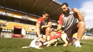 Rnzfb Guide Dog Puppies In Training With The Nz Warriors.