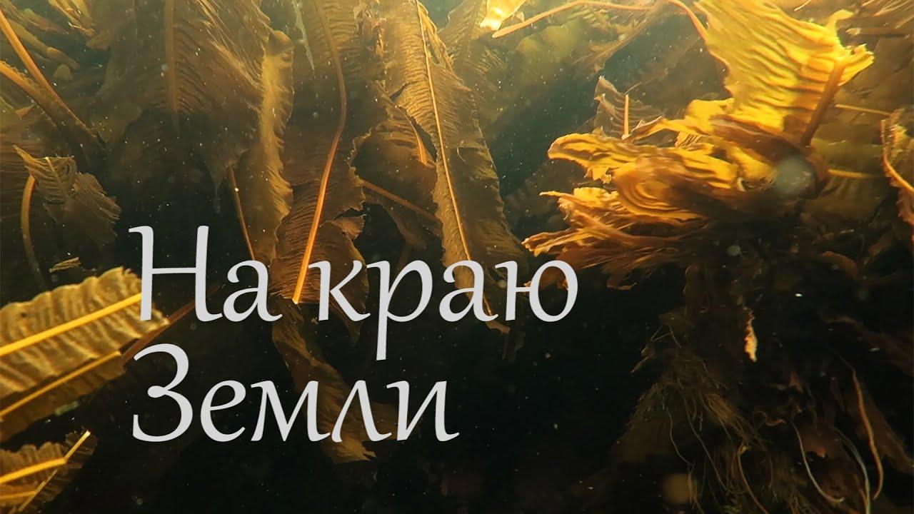 Баренцево море, Дальние Зеленцы. 11-17 июля 2021.