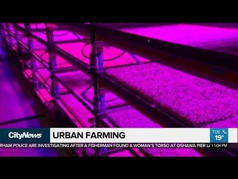 Urban vertical farming hits Toronto