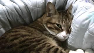 クシャミをすると怒る猫 thumbnail
