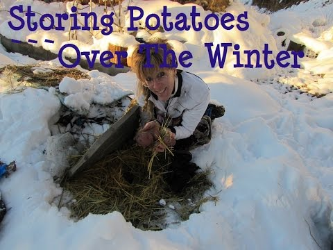 Off Grid Winter: Storing Potatoes Over Winter