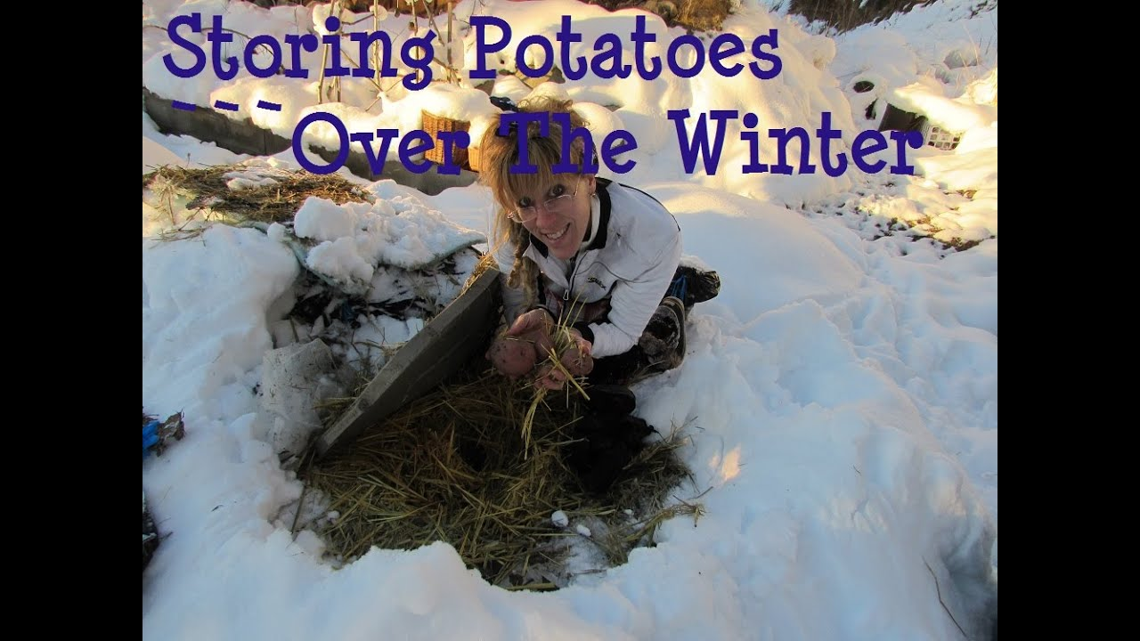 & Off Grid Winter: Storing Potatoes Over Winter - YouTube