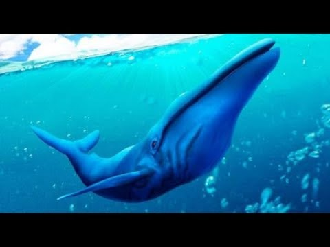 Blue Whale Simulator 3D Android Gameplay FHD