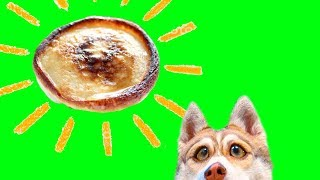 ОЛАДУШКИ ЧЕЛЛЕНДЖ!! (Хаски Бублик) Говорящая собака Mister Booble