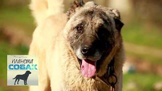 Кангал. Планета собак 🌏 Моя Планета