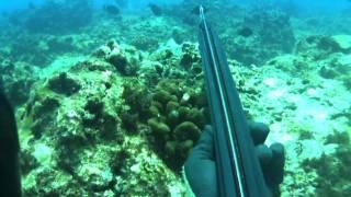 hkd 10 hypnotized spearfishing hawaii