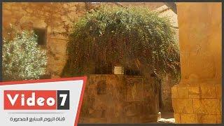 شجرة العليقة المقدسة التى ناجى عندها النبى موسى ربه