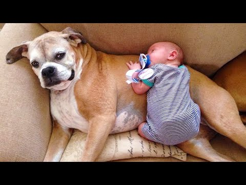 Cutest Babies And Dogs Doing Crazy Things Together #4 | Cute babies Compilation