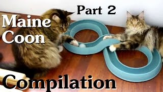 Maine Coon Compilation  Part 2 of Maine Coon Cats doing Maine Coon things