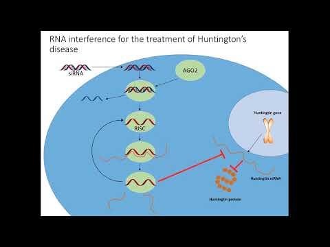 RNAi-based Huntingtin Lowering In The Central Nervous System: A New Potential HD Therapeutic.