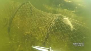 Рыба в мереже