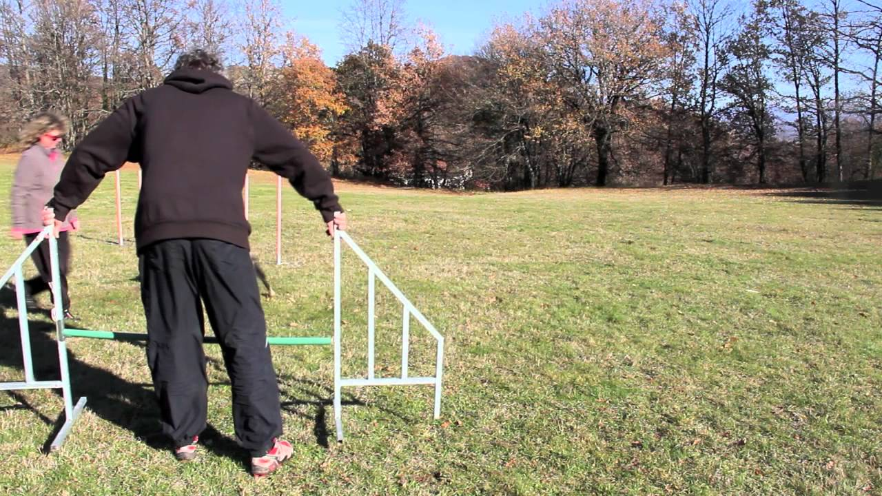 slalom Pepe training agility dog allevamento border collie di petrademone.mov