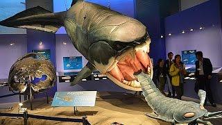 国立科学博物館「生命大躍進」展=奇跡の霊長類化石「イーダ」の実物展示