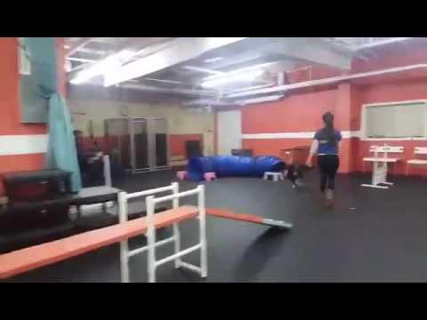 Agility Classes | Solid K9 Training Dog Training