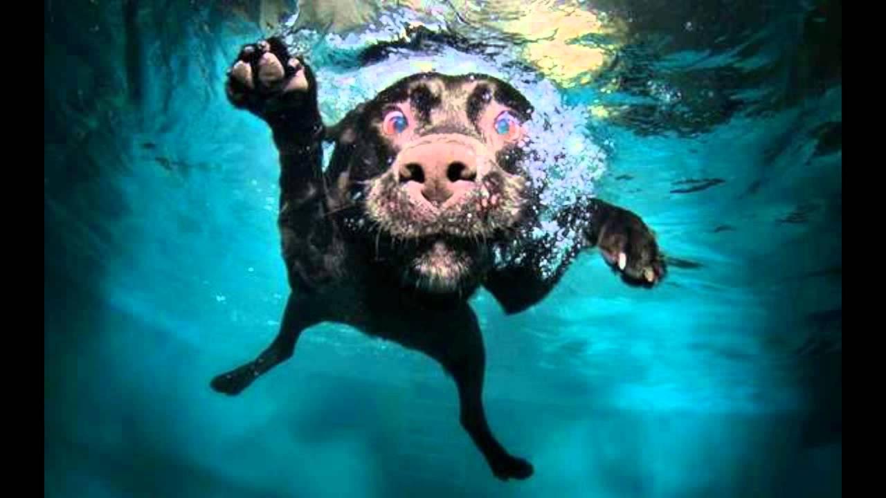 Amazing Underwater Dog Images - YouTube