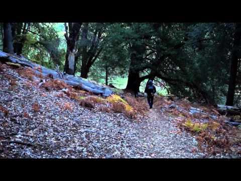 Palomar Mountain Camping Trip