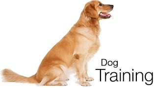 The How To  At Home Dog Training System And Course