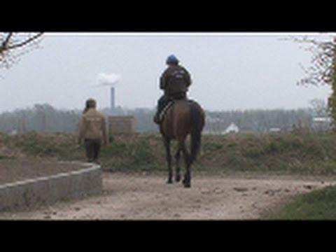 Healthy Horse Racing - Del 2