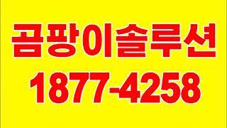 천장 곰팡이 원인, 석고보드 곰팡이제거(비용 방법)