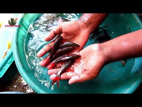 CHEAPEST AQUARIUM FISH SELLER । GALIFF STREET PET MARKET KOLKATA   30TH JUNE 2019 VISIT