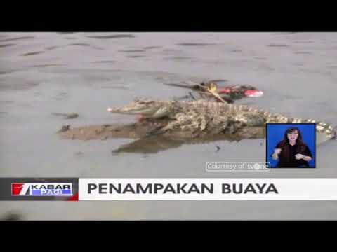 Seekor Buaya Terekam Kamera Muncul di Kawasan Pondok Dayung, Tanjung Priok
