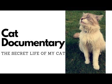 Short Cat Documentary 4K