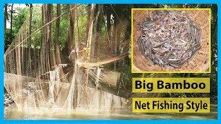 Shrimp Fish Catching By Big Bamboo & Net Fishing Style | Fish Corn
