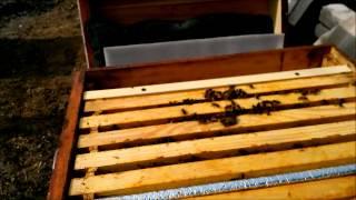 Приготовление 2%-ного водного раствора щавелевой кислоты. Весенняя обработка пчел.Вeekeeping