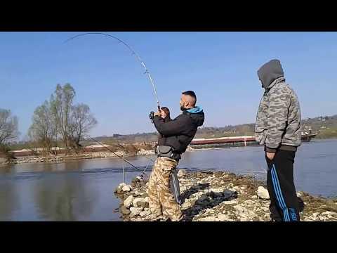 Som,20kg na varalicu,Dunav,Bezdan(Catfish,20kg,Danube,Bezdan)