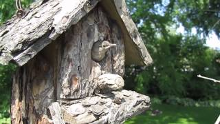Baby Birds Leaving Birdhouse