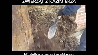 Koszmat zwierząt z Kazimierza - nowe życie w Korabiewicach