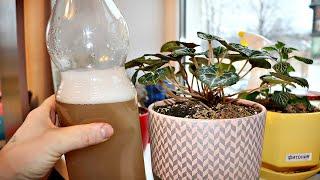 Без комментариев! Просто полейте весной этим рассаду и комнатные цветы! актара от вредителей рассады