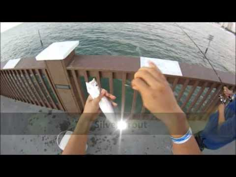 Clearwater Beach Fishing Pier On Florida's West Coast (Whiting And Silver Trout) GoPro