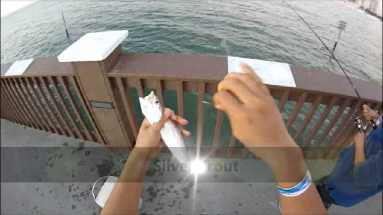 Clearwater beach fishing pier on florida 39 s west coast for Clearwater beach fishing