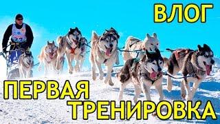 ВЛОГ: ЕЗДОВОЙ СПОРТ! Ездовые собаки хаски и маламут / VLOG  Sledge dogs husky and malamute