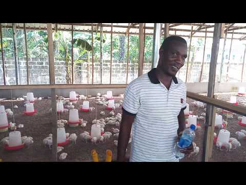 How To Disinfect Your Poultry House In-between Cycles