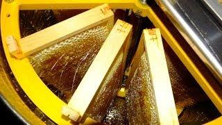 Apiculture: récolte du miel (désoperculation, extraction et filtration)