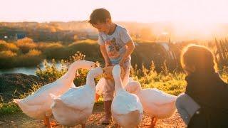 Пять причин отказаться от содержания гусей//Мое хозяйство//Делимся опытом