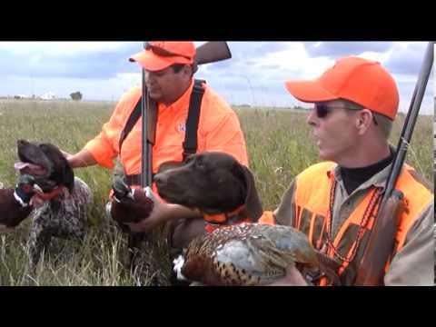 Zeus Gun Dog Training and Pheasant Hunting