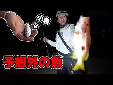 ��撃】釣���魚を夜�堤防�����ら・・・