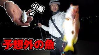 【衝撃】釣った小魚を夜の堤防に落としたら・・・