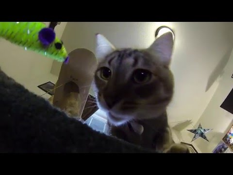 Slow motion cat attack