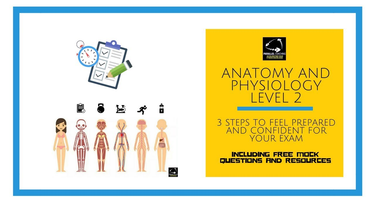 Anatomy and Physiology level 2: 3 steps to feel prepared and ...