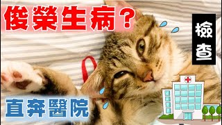 【SoybeanMilk Cat】 What's Wrong with Junrong? He Is Too Quiet...
