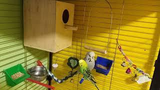 Домик для волнистых попугаев