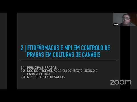 Palestra sobre Produção de Canábis em Portugal - Sabores Púrpura
