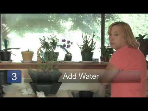 Growing a Spice Garden Indoors
