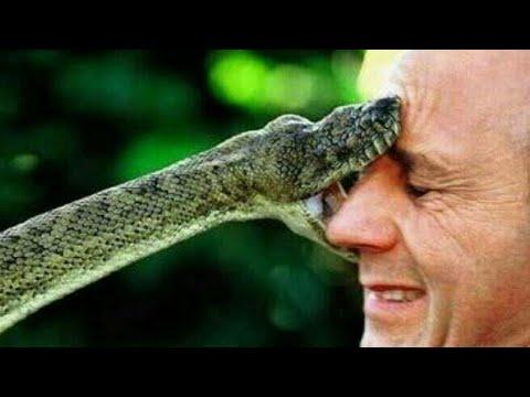 Horror snake bite| Black mamba/Cobra - YouTube
