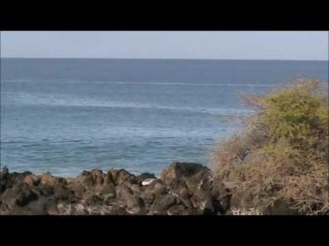 Hawaii 2012 whales
