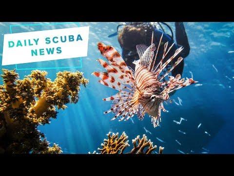 Daily Scuba News - New Zealand's sunken forest - YouTube